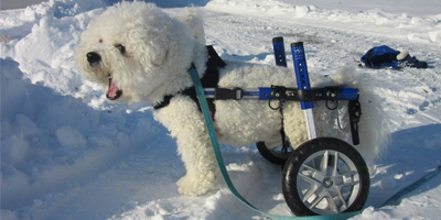 Walkin' Wheels Dog Wheelchair Mini