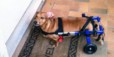 Walkin' Wheels Dog Wheelchair Small