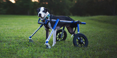 Walkin' Wheels Dog Wheelchair Quad