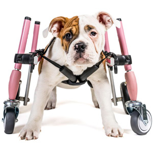 Quad Walkin' Wheels Wheelchair
